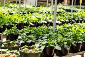 Internship America horticulture,landscaping, America