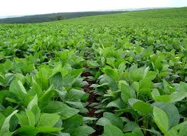 Veld sojabonen Agrixperience stage Amerika