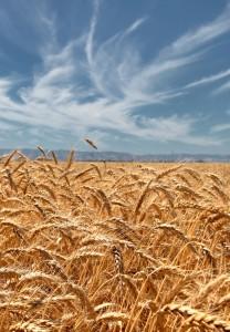Grain internship USA Agrixperience