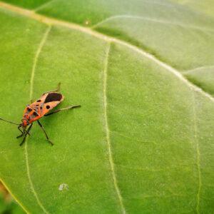 veldonderzoek insecten